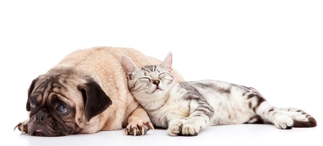 pets tips to keep your pets safe in cold winter weather - cat and dog resized - Tips to Keep Your Pets Safe in Cold Winter Weather